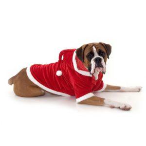 large-dog-santa-outfit